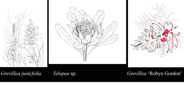 three flora drawings